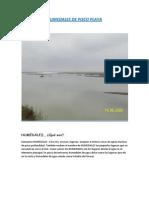 Humedales de Pisco Playa-eco
