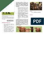 Preñez en Vacas