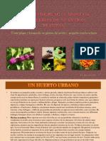 Listado de Plagas de Nuestras Plantas