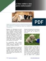 Como Cuidar a Una Perra Embarazada