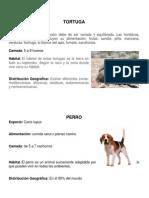 20 animales.docx