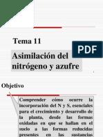 Tema 11. Asimilacion de Nitrogeno y Azufre