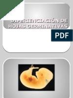 DIFERIENCIACIÓN DE HOJAS GERMINATIVAS