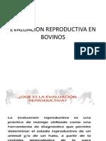 Evaluacion Reproductiva en Bovinos