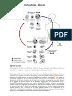 Ciclos de vida parasitos.docx