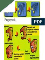 02 Method of Feeding in Amoeba
