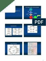 regulacion metabolica.pdf