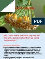 GRAFT UNION (Perbanyakan Tan)_2