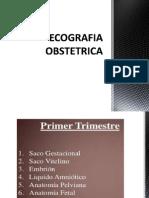 ECOGRAFIA OBSTETRICA