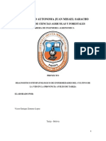 Diagnostico Fitopatologico de Enfermedades Del Cultivo de La Vid en La Provincia Aviles de Tarija