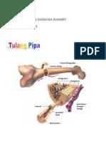 Biologi tulang & otot