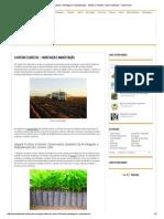 O Viveiro Florestal – Montagem e Manutenção - Mudas e Plantas _ Meio Ambiente - Cultura Mix