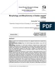 Morphology Aedes Sp English Journal