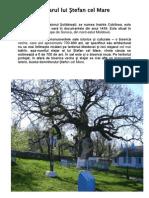 Stejarul Lui Ştefan Cel Mare