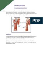 Lesiones Del Nervio Músculocutaneo