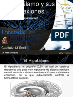 hipotalamo CAP13
