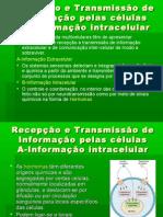 4º-Tipos de receptoresTransmissão de informação intracelular