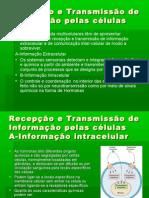 Transmissão de informação celular