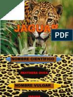 jaguar zootic 2