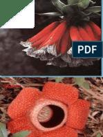 Fflores Exoticas