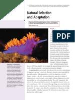 Natural Selection 11 and Adaptation