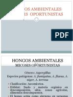 41.- HONGOS AMBIENTALES