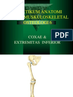 extremitas inferior6