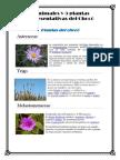 5 Animales y 5 Plantas Representativas Del Chocó