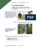 Bosque andino patagónico