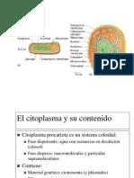 4-Procariote