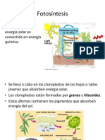 5-Fotosíntesis