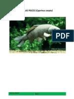 Kelas Pisces (Cyprinus Carpio)
