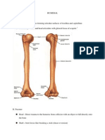 Humeral