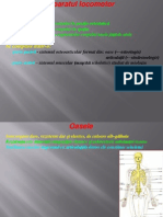 Anatomie Curs 2 2012