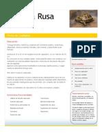 Tortuga Rusa