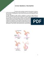 44. Relación Hipotálamo Neurohipófisis