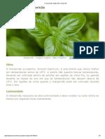 Como Plantar Manjericão _ Hortas