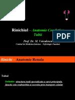 Rinichiul – Anatomie Corelativa -cont.-