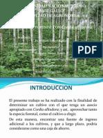 CORDIA ALLIODORA- DIAPOSITIVAS
