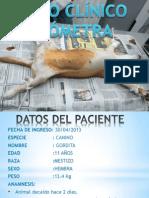 Caso Clinico -Piometra