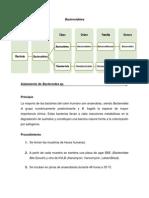 Bacteroidetes - Protocolo