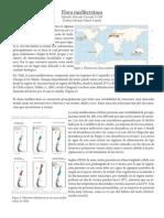 Flora mediterránea.pdf