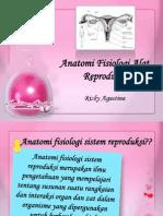 Anatomi Fisiologi Organ Reproduksi
