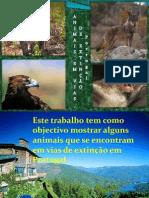 Animais Em Vias de Extinção 2