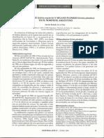 01-Nidos de Yabiru (Jabiru Mycteria) y Milano Plomizo (Ictinia Plumbea) en El Nordeste Argentino