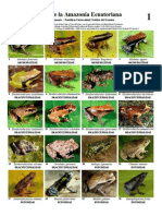 193 Ecuador Amphibians