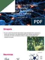 Sinapsis Muscular y SNC