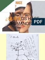 cromosoma 2.pps