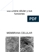 Membrana célular y sus funciones
