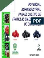Frutillas en Chihuahua